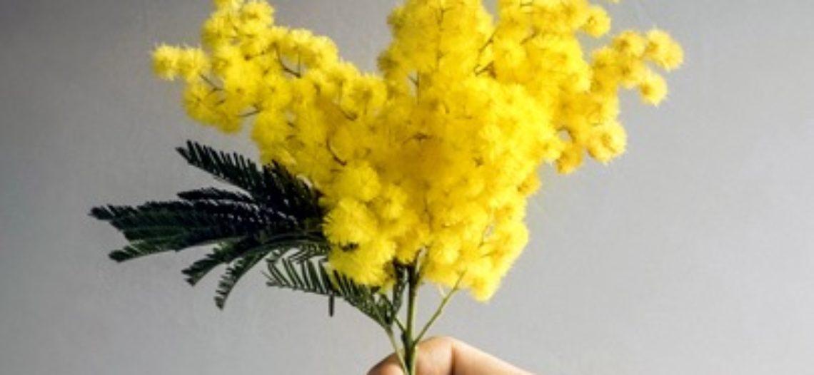 Non regalarmi mimose, ma parità
